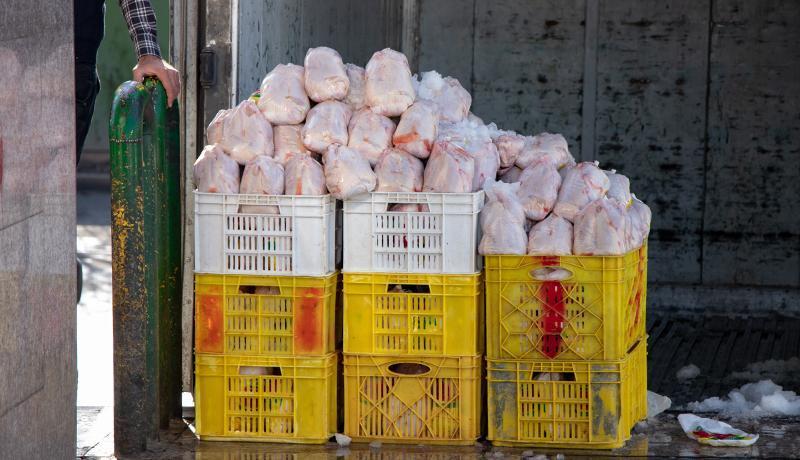 قیمت هر کیلو مرغ به 12 هزار تومان رسید