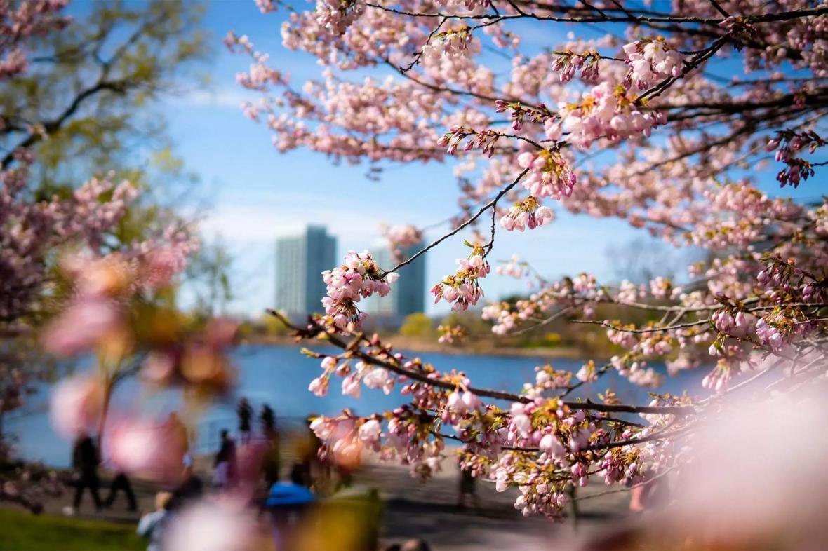 مقاله: آب و هوای کانادا | آب و هوای ونکوور | آب و هوای تورنتو | آب و هوای مونترال، کلگری