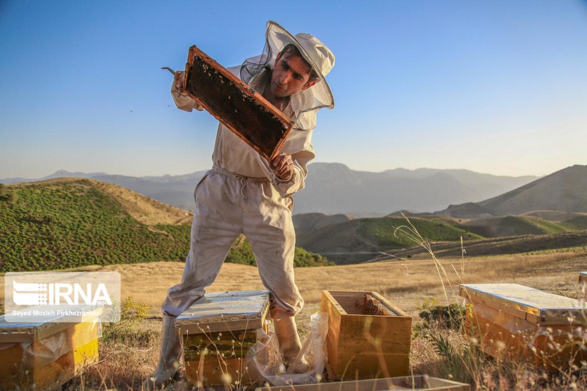 خبرنگاران زنبورداران کردستانی 13 میلیارد ریال تسهیلات دریافت کردند