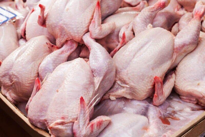 خبرنگاران 12 تن مرغ گرم در کاشان توزیع می شود