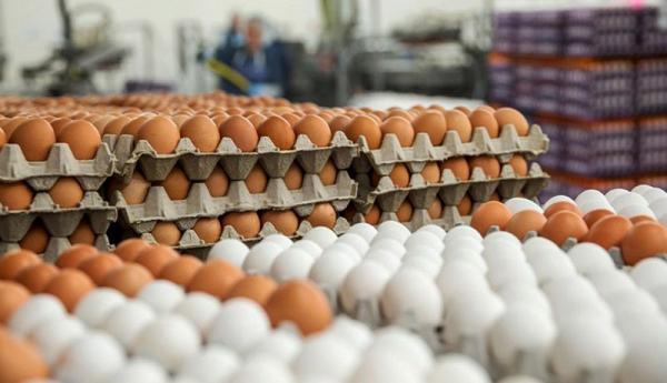 حداقل قیمت هر تخم مرغ 1200 تومان است